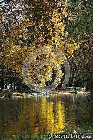 Free Autumn Colorful Foliage Over Lake In Lazienki Krolewskie Park In Warsaw, Poland Royalty Free Stock Photo - 34417685