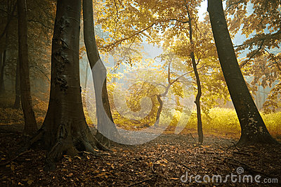 Autumn in a colorful forest