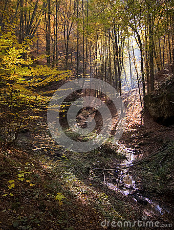 Autumn in a colorful forest with yellow leaves and sun rays