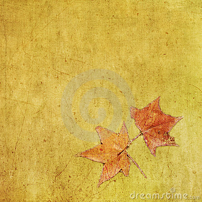 Free Autumn Colorful Maple Leaf On Grungy Background Stock Images - 15768234