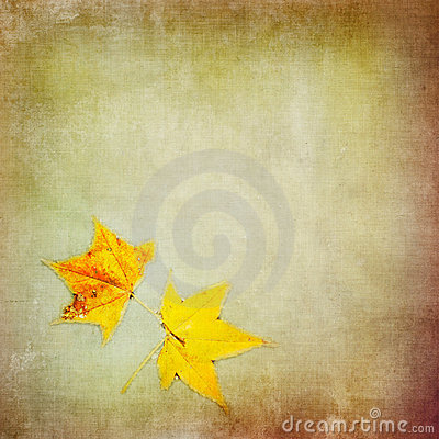 Free Autumn Colorful Maple Leaf On Grungy Background Stock Image - 16327641