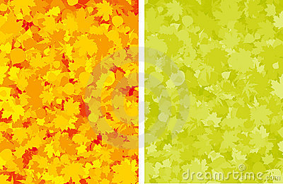Autumn colorful maple leaves.