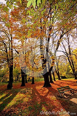 Free Autumn Colors At Sundown Royalty Free Stock Image - 14558656