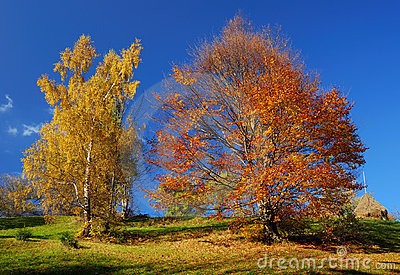 Autumn colors landscape