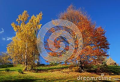 Autumn colors landscape