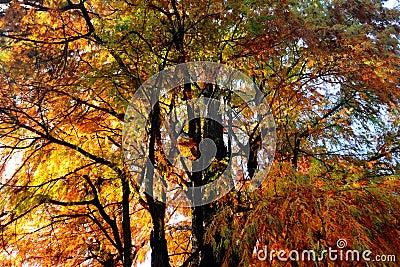 Autumn colors in Milano public park