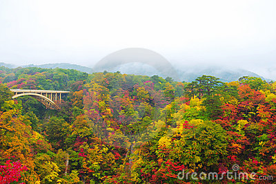 Autumn Colors of Naruko-Gorge