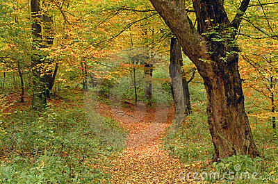 Autumn colors and path