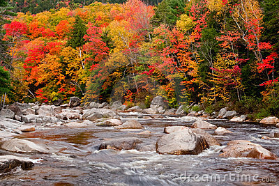 Autumn Colors Beside Stream