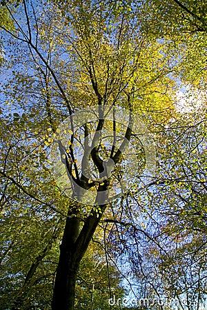 Free Autumn Colour Lickey Hills England Stock Image - 1314631