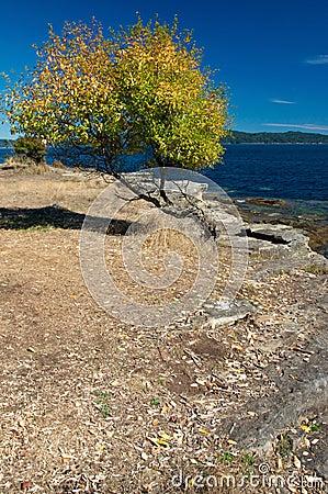 Autumn colours along the west coast of Canada
