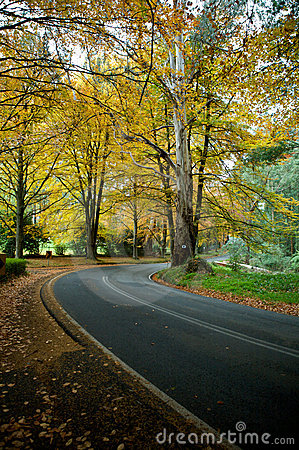 Autumn colours on a journey road, forrest