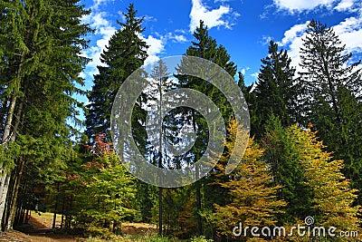 Autumn Colours, Zelezna Ruda, Boemerwald, Sumava Czech Republic