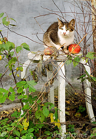 Autumn composition with a cat and apples