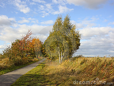 Autumn cycle path