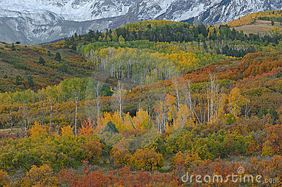 Autumn Dallas Divide