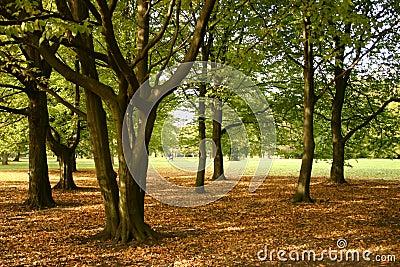 Autumn Day II