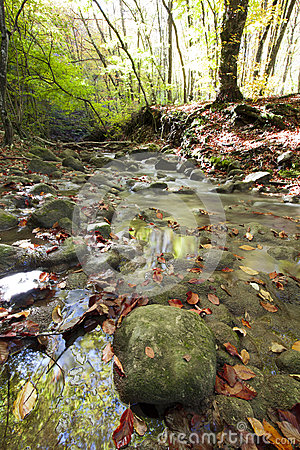 Autumn day in the wood with a stream