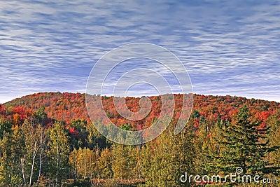 Autumn at Eastman.