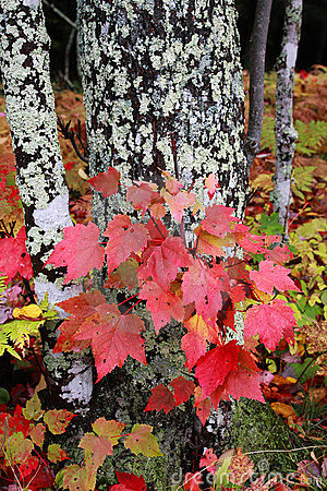 Free Autumn Fall Colors Royalty Free Stock Images - 11380979