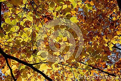 Autumn/fall Leafs.