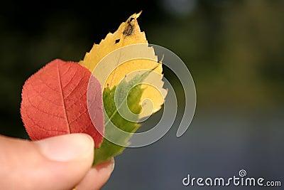 Autumn / Fall leaves