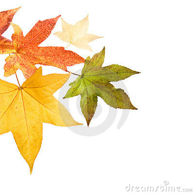 Free Autumn Fall Leaves Royalty Free Stock Images - 3559859