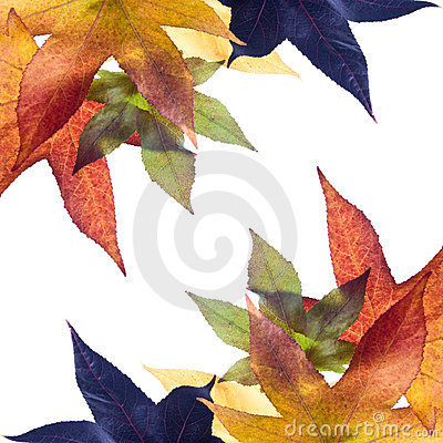 Free Autumn Fall Leaves Stock Image - 3570731