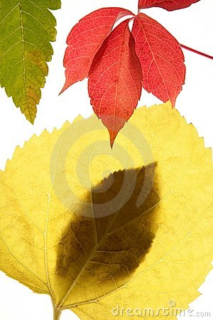 Autumn, fall leaves decorative still at studio whi