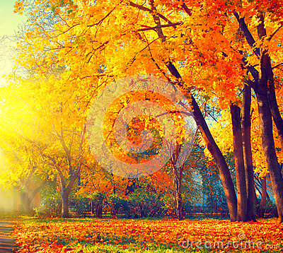 Free Autumn. Fall Nature Scene. Autumnal Park Royalty Free Stock Photos - 77869158