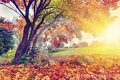 Autumn Fall Park Colorful Leaves Stock Photos Image
