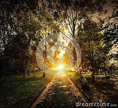 Autumn, fall park. Wooden path towards the sun