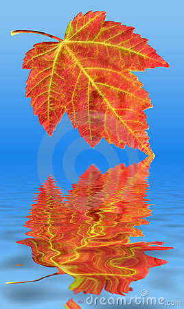 Autumn Fall Red Maple Leaf Water Reflection