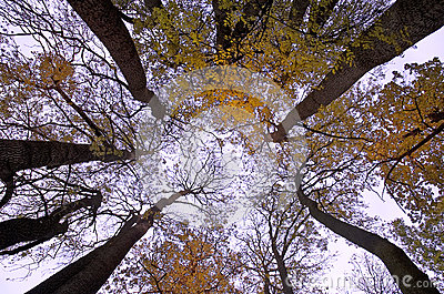 Autumn Fall trees with vivid colors and blue sky