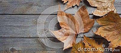 Autumn Fall Wood Background