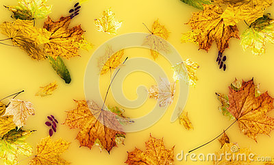 Autumn fallen down leaves