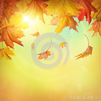 Free Autumn Falling Leaves Stock Image - 33347581