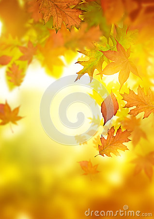 Free Autumn Falling Leaves Stock Photography - 34573642
