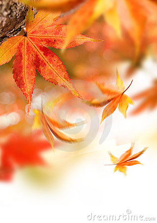 Autumn Falling Leaves Stock Photography - Image: 6719722