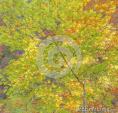 Free Autumn Feeling Royalty Free Stock Image - 45952796