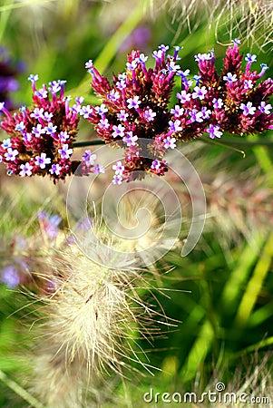 Free Autumn Flowers. Royalty Free Stock Photos - 15978208