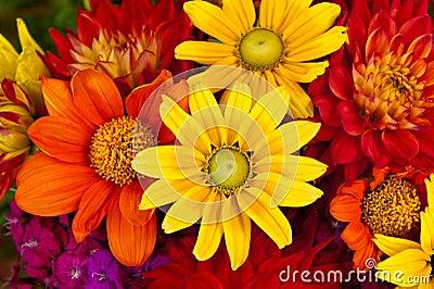 Autumn Flowers Stock Photo