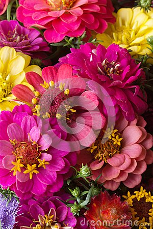 Free Autumn Flowers Stock Images - 26739404
