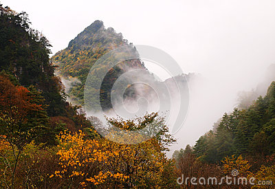 Autumn fog forest, gansu province, China