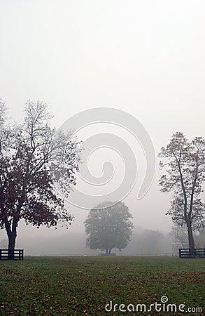 Autumn foggy scene