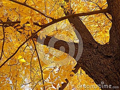 Autumn foliage 1
