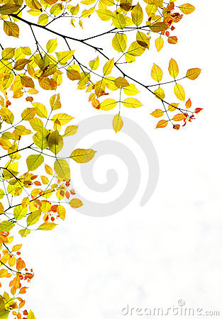 Autumn foliage background copy space