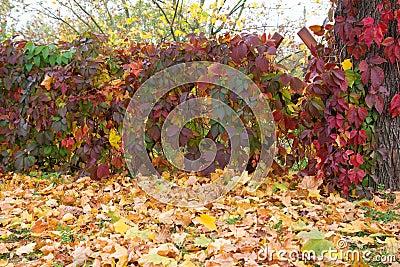 Autumn foliage and fence