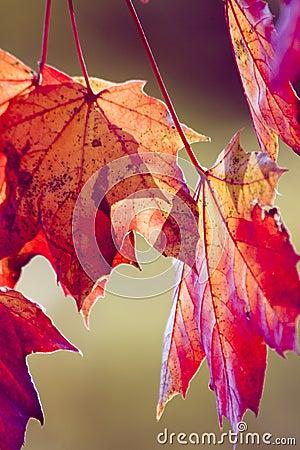 Autumn foliage II