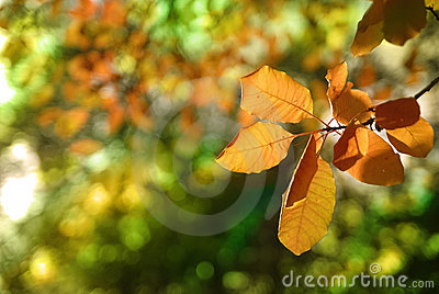 Autumn foliage of trees 2